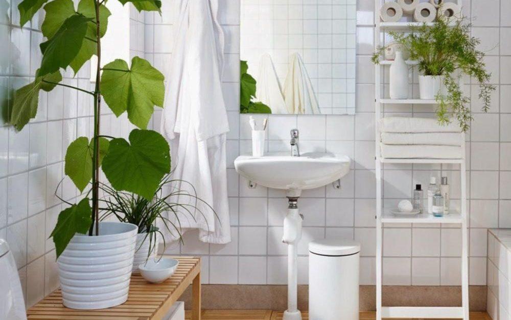 Растения для ванной комнаты, которые могут удалять токсины