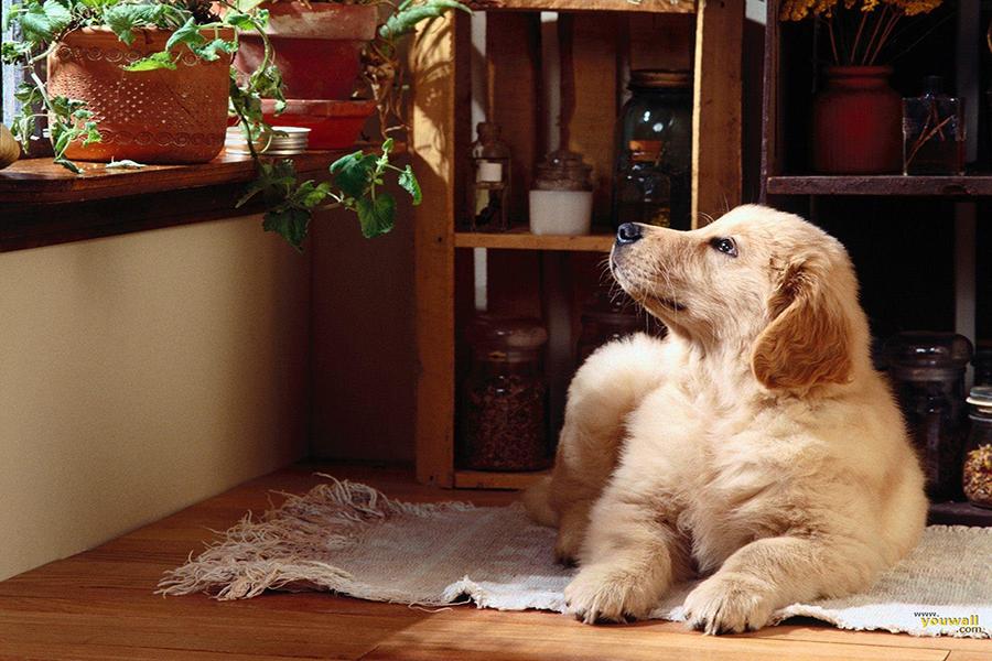 Как сделать дом более дружелюбным к домашним животным